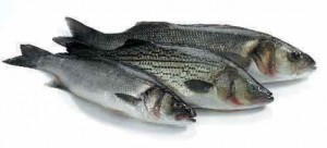 Sea_Bass
